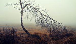 ドレッドの根元が細くなったときの対策は? dreadlocks thin roots