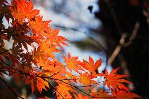 フリーフォームドレッドをはじめるのに秋をすすめる理由